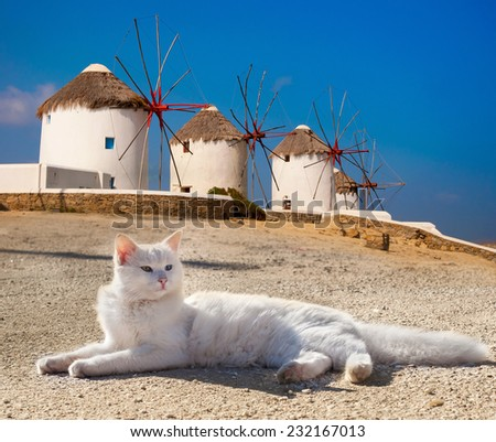 Beautiful white cat lying on a background of the famous windmills of Mykonos. Greece. - stock photo
