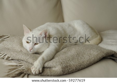 beautiful white cat lying on a blanket - stock photo