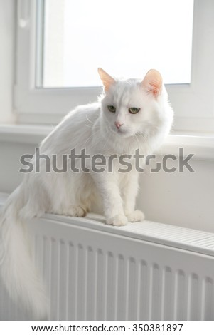 Beautiful white cat sitting on the radiator closeup - stock photo