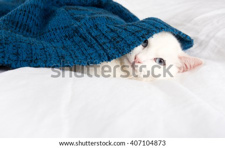 Beautiful White Cat with Blue Eyes Relaxing on Belgian Linen Sheets under Blue Sweater - stock photo
