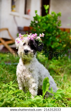 beautiful white dog with wreath of forest flowers - stock photo