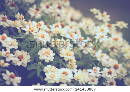beautiful white flower in vintage color tone - stock photo