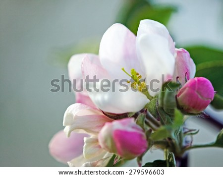 Beautiful white flower with amazing blossoms and green leaves - stock photo