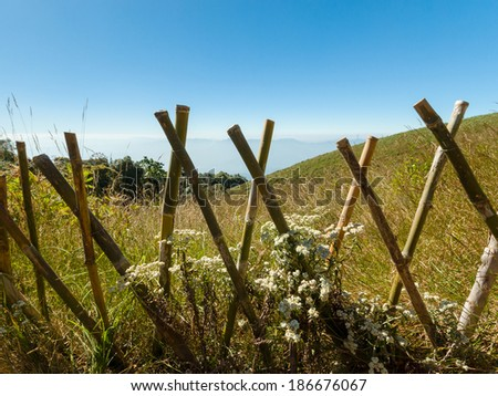beautiful white flowers with bamboo fence at inthanon national p - stock photo