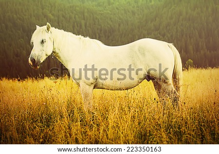 Beautiful white horse grazes in the mountains, amazing hipster natural background - stock photo