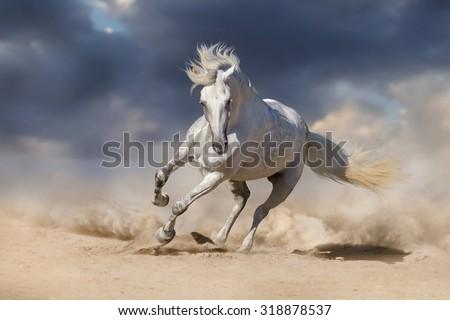 Beautiful white horse run in desert against dramatic sky - stock photo