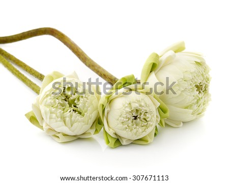 beautiful White Lotus flower, isolated on white background - stock photo