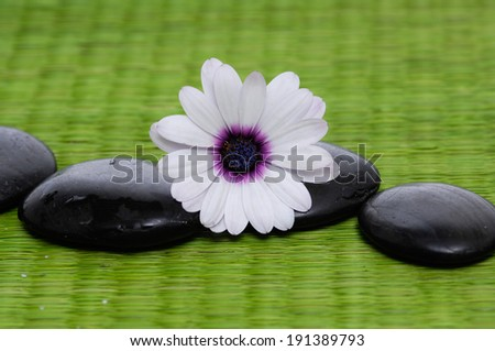 Beautiful white orchid and zen Stones on green mat - stock photo
