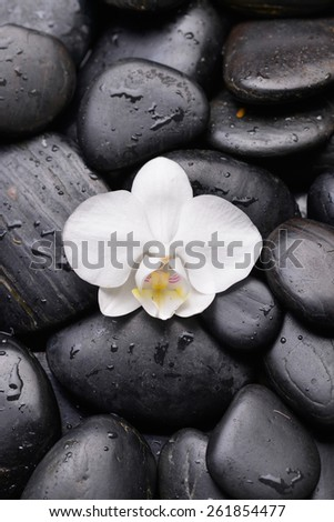 Beautiful white orchid on wet pebbles - stock photo