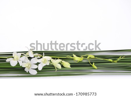 Beautiful white orchid with green leaves - stock photo