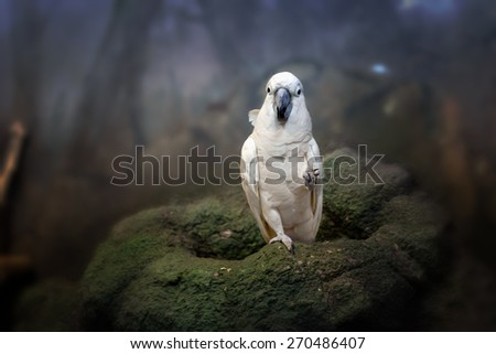 beautiful white parrot ara in zoo from Moscow - stock photo
