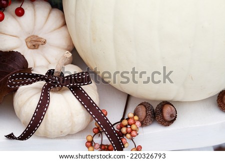 Beautiful white pumpkin with a brown bow. - stock photo