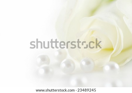 Beautiful white rose with pearls - stock photo