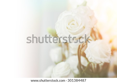 beautiful white roses in soft pastel style. Close Up with extremely shallow DOF. - stock photo