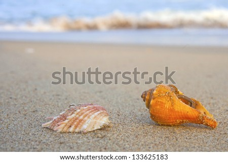 Beautiful white sea and waves shell on sand background - stock photo