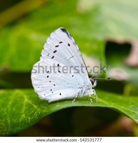 Beautiful wild butterfly - stock photo