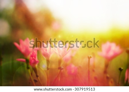 Beautiful wild flowers in field with sunlight, at sunset - stock photo