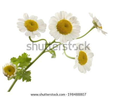 Beautiful wild flowers isolated on white - stock photo