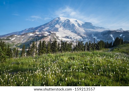 Beautiful wildflowers and Mount Rainier, Washington state - stock photo