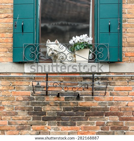 Beautiful window on the ancient wall and small dog - Venice, Italy  - stock photo