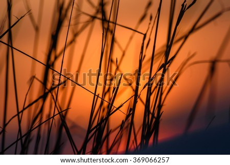 Beautiful winter abstract background of dry grass in the snow in a bright orange sunset light - stock photo