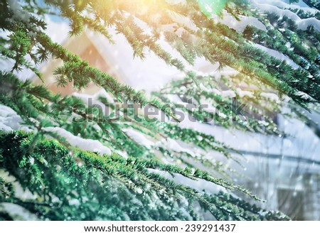 Beautiful winter background, fresh evergreen tree branches covered with snow, beauty of wintertime nature, Christmas holidays concept - stock photo
