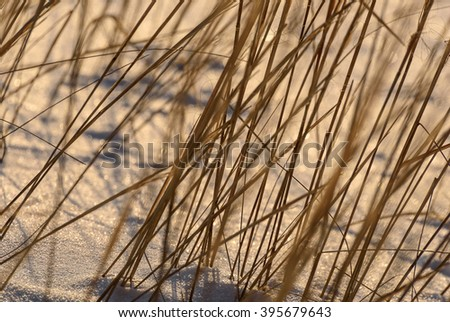 Beautiful winter background of dry grass in the snow at sunset - stock photo