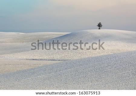 beautiful winter field - stock photo