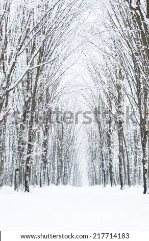 beautiful winter forest  and the road - stock photo