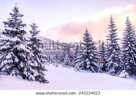 Beautiful winter forest landscape, majestic view on a pine trees covered with snow, pink sunset in mountains, wintertime beauty of nature - stock photo