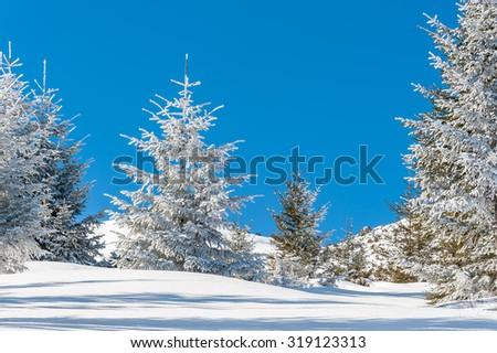 Beautiful winter forest with snow-covered trees on a bright sunny day, landscape - stock photo