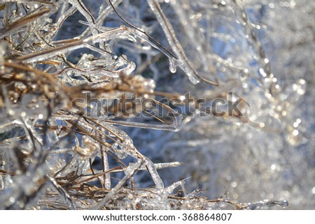 Beautiful winter landscape. Branches in the sparkling ice. - stock photo