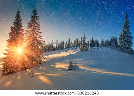 Beautiful winter landscape in mountains. View of snow-covered conifer trees and snow flakes at sunrise. Merry Christmas's or New Year's background.  - stock photo