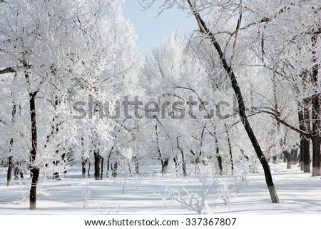 Beautiful winter landscape in the forest, clear frosty day. - stock photo