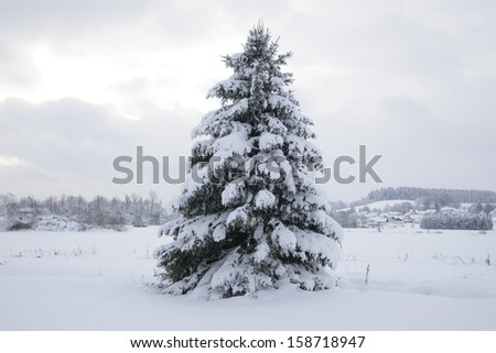 Beautiful winter landscape in the forest outside - stock photo