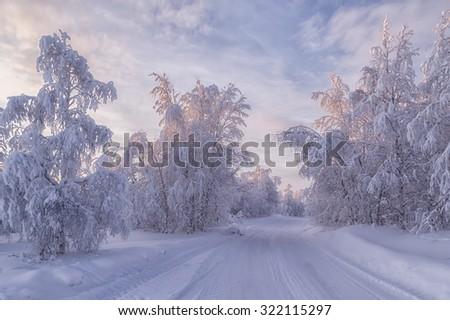 beautiful winter landscape. Winter forest - stock photo