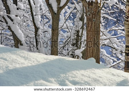 beautiful winter landscape with a snow-covered forest on a sunny winter day. Focus on tree branches. - stock photo