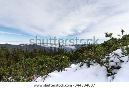 Beautiful winter landscape with green pine trees. Carpathians - stock photo