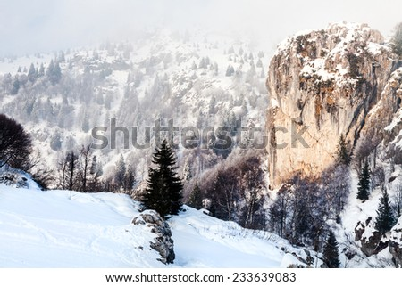 Beautiful winter landscape with snow - stock photo