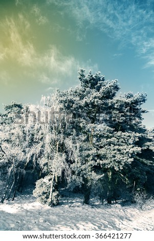 Beautiful winter landscape with snow covered trees.Toning image. - stock photo