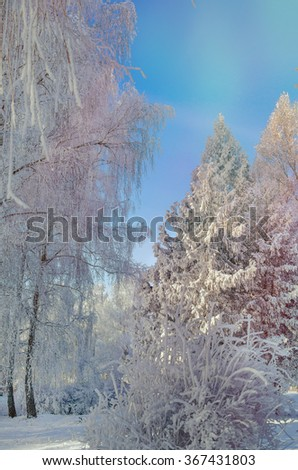 Beautiful winter landscape with snow covered trees. Winter park in snow. Winter forest in sunny day with blue sky. Frosty winter landscape in snowy forest. Winter background. Toning effect. - stock photo