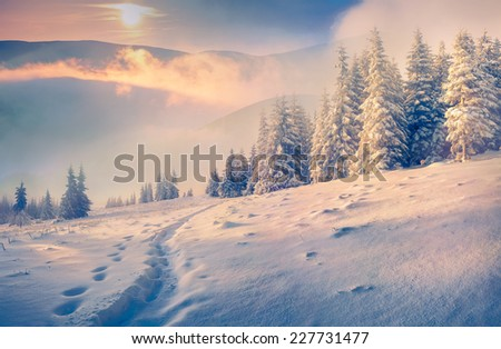 Beautiful winter morning in the mountains - stock photo