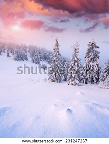 Beautiful winter sunrise in the mountain forest. - stock photo