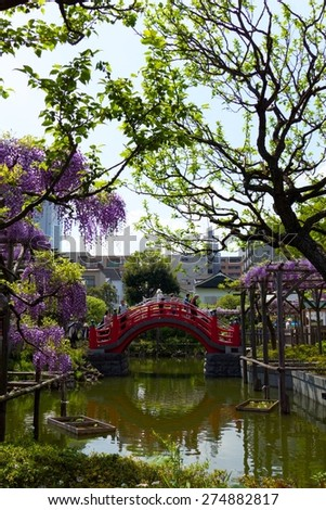 Beautiful wisteria hang over the water near a traditional Edo-style bridge in Tokyo - stock photo