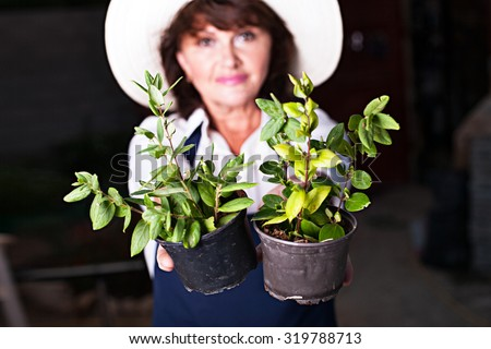 Beautiful woman gardener offers two pots with seedlings of vegetables or flowers plant trees. Image of young shoots of seedlings in pots on a background of blurred woman gardener - stock photo