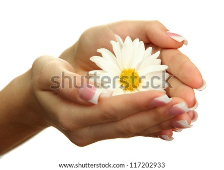 Beautiful woman hands with camomile, isolated on white - stock photo