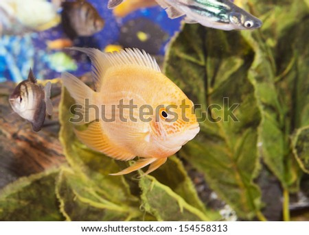 Aquarian Small Fish Stock Photos Images Pictures