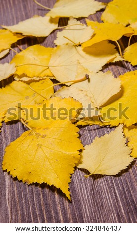 beautiful yellow autumn leaves isolated on wooden background in the picture - stock photo