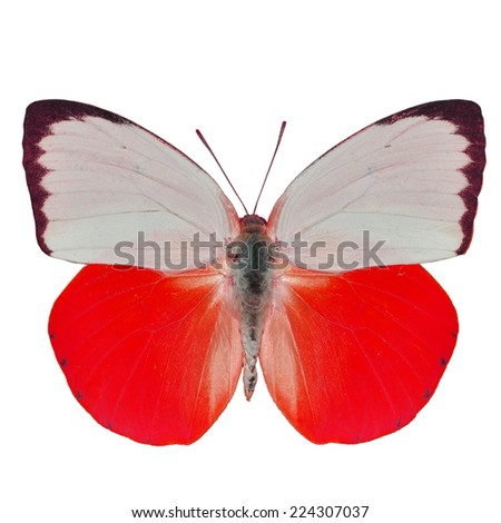 Beautiful yellow butterfly isolated on white background - stock photo