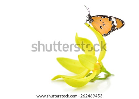 Beautiful yellow butterfly on flower isolated on white background - stock photo